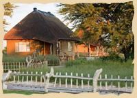 Copyright: Grassland Bushman Lodge