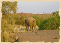 Elefant bei der Palmwag Lodge
